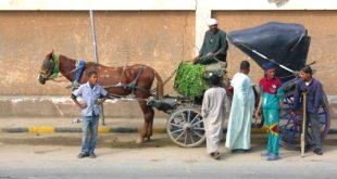 صورة عربة في مصر