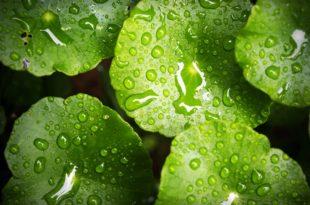 green نبات خضرة