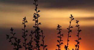 ربيع طبيعة غروب