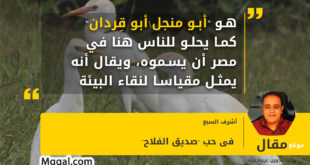 """هو """"أبو منجل\أبو قِردان"""" كما يحلو للناس هنا في مصر أن يسموه، ويقال أنه يمثل مقياسا لنقاء البيئة"""