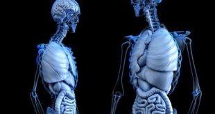 تجارة الاعضاء البشرية، جسم الانسان