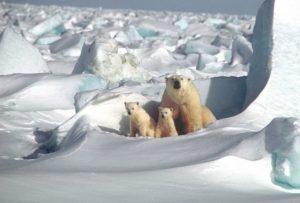 درجات الحرارة المرتفعة تهدد القطب الشمالي وذوبان الجليد هو الخطر الأكبر على الإنسان والحيوان ،وستكون هناك حيوانات مهددة بالإنقراض مثل الدب القطبي .