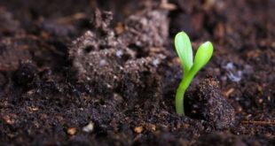 سر تلك البذرة قبل أن تصبح هذه الوردة الجميلة - #قصة... بقلم:ماريت ماهر... موقع مقال