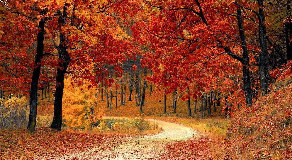 تغريدات الخريف - #قصة..بقلم: عبد الكريم ايت بلال..موقع مقال