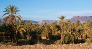 التنوع البيولوجي بإقليم سيدي بنور: مُكَوِّنَات مَحَلِّيَة مَعْدُودَة تُحَقِّقُ التنمية المستدامة المَنْشُودَة. بقلم: نبيل الهومي|| موقع مقال